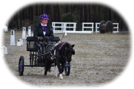 Australian Carriage Driving Society - Victorian Branch